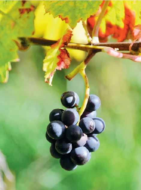 納帕酒莊 葡萄酒 - 安可人生雜誌