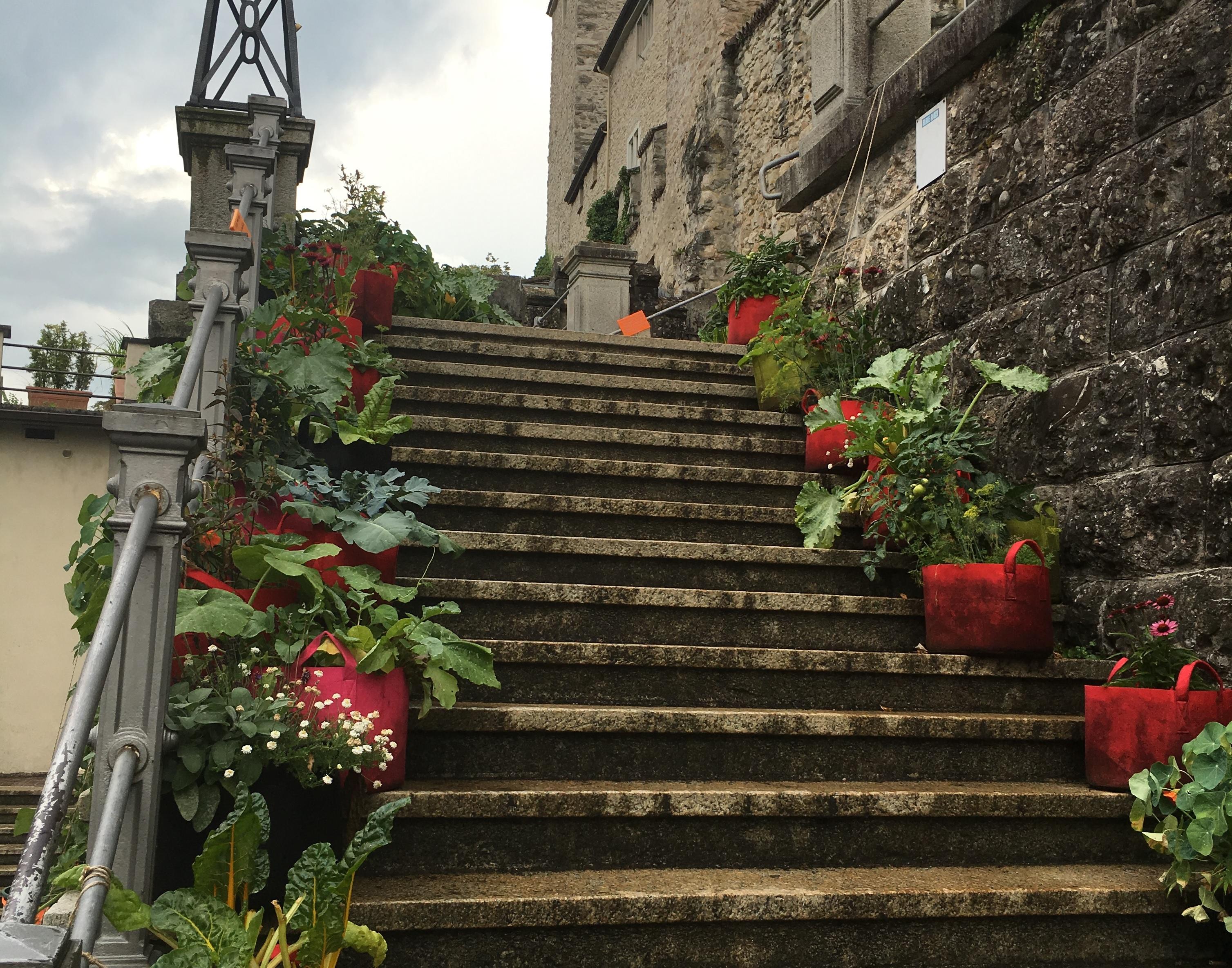 創意生活|一顆種子的魔幻力量 蘇黎世的園丁生活運動