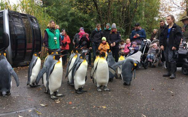 動物園的孩子王 蘇黎世退休族的志工樂