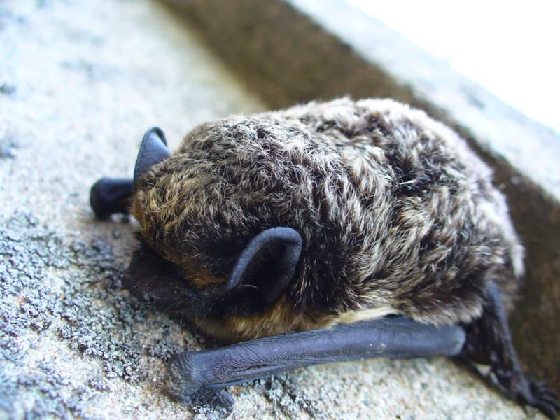 床邊故事|世界上哪種動物最愛睡覺?!