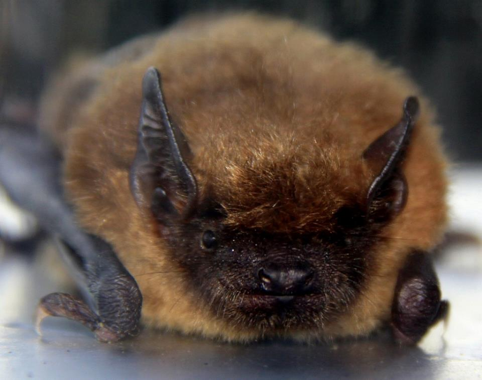 最愛睡覺的動物 - 蝙蝠 - 安可人生