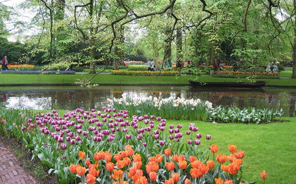 春遊荷蘭 在地人獨家推薦世界最美花田祕境!