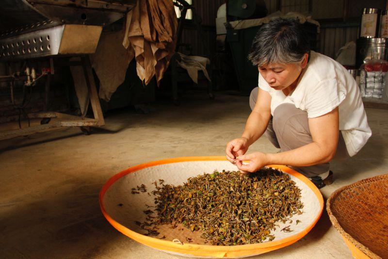 鋼琴老師用音律顧茶園,種出新竹佛山有機白茶