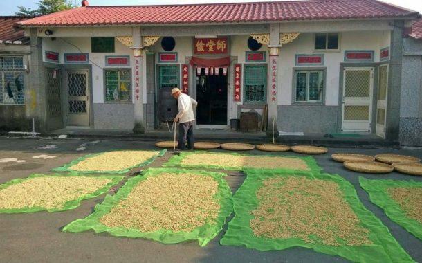 回鄉種500棵咖啡樹,蕭採仁實現退休夢