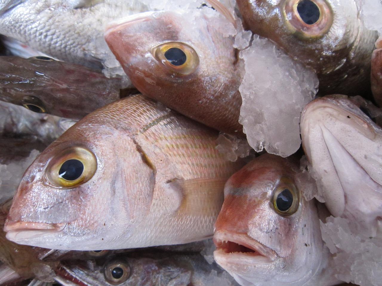 台灣季節魚 - 安可人生雜誌