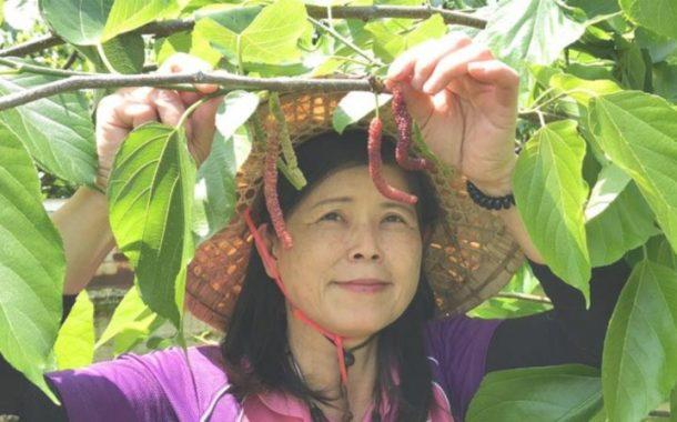 下載採果地圖,來趟台灣水果小旅行