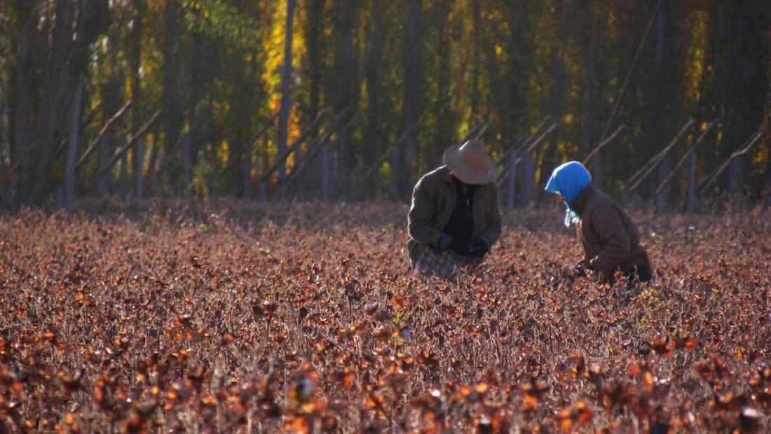 敦煌私景點,走進呂家堡鄉的小農棉花田
