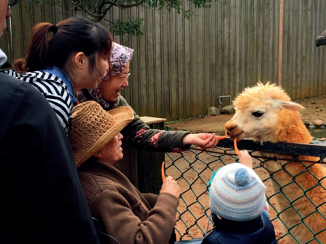 帶爸媽旅行 | 增進家庭互動,另類動物療癒之旅