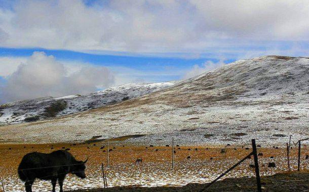 馬蹄壯遊|馳騁213國道,造訪「俗事止步」的 若爾蓋 草原