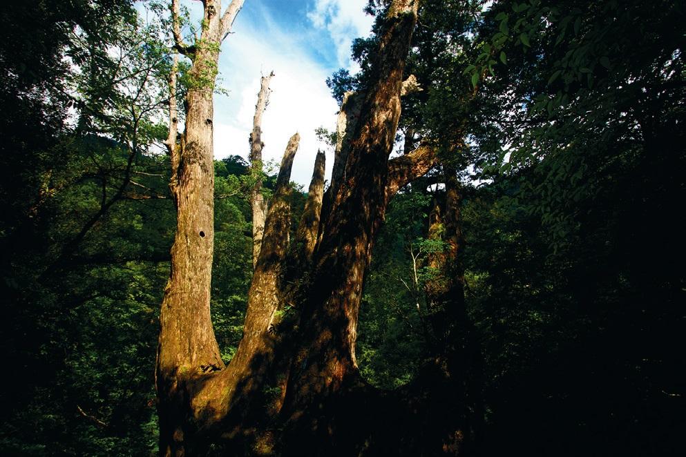 森林步道 - 安可人生雜誌