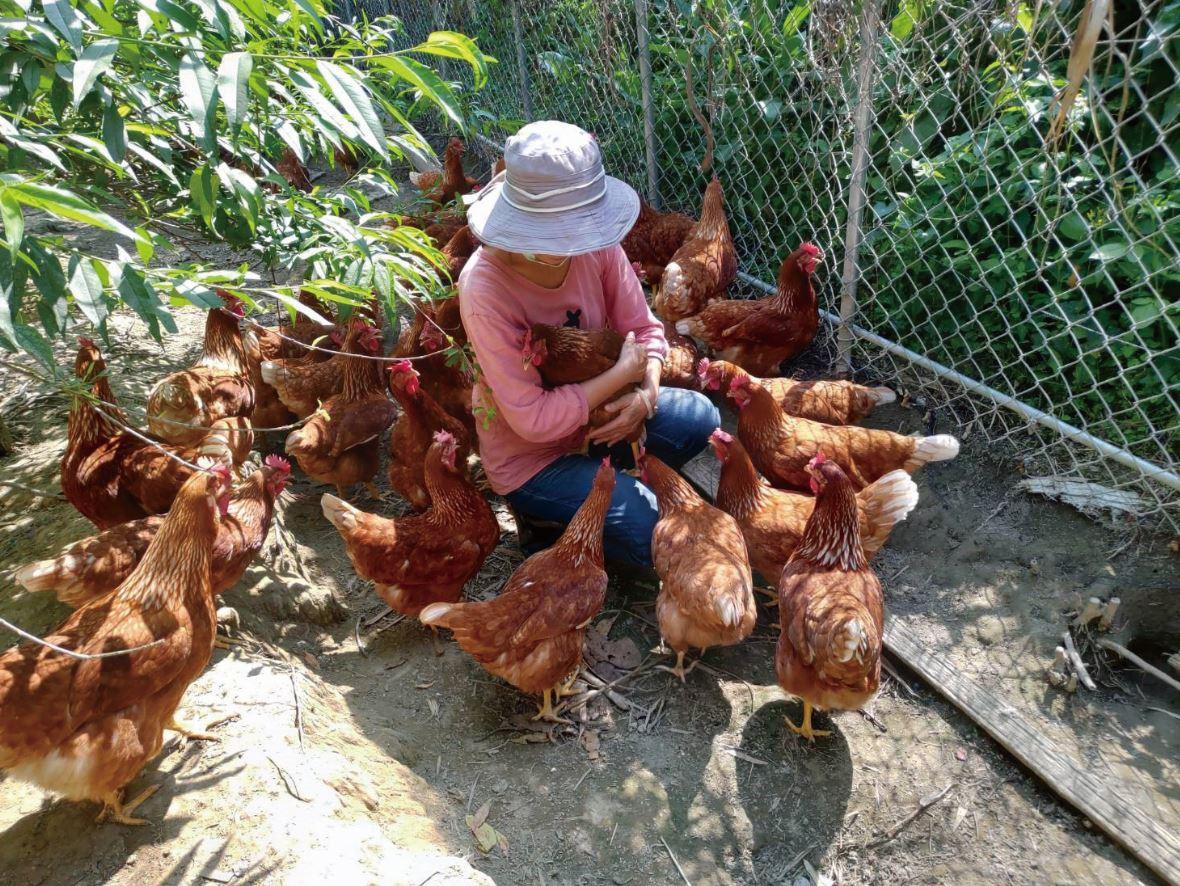 安可人生19期封面故事|友雞生活  透過友善飼養,兜起志同道合的銀髮族夥伴