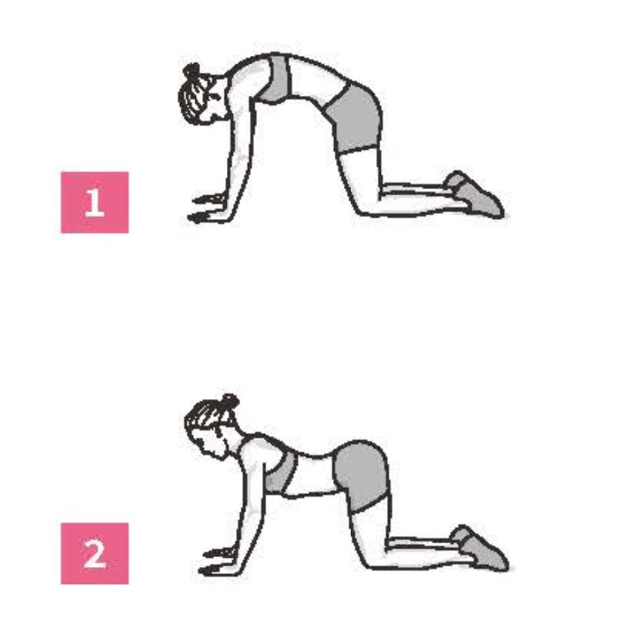 50組在家徒手健身腹腿臀計畫_四足跪姿脊椎放鬆術