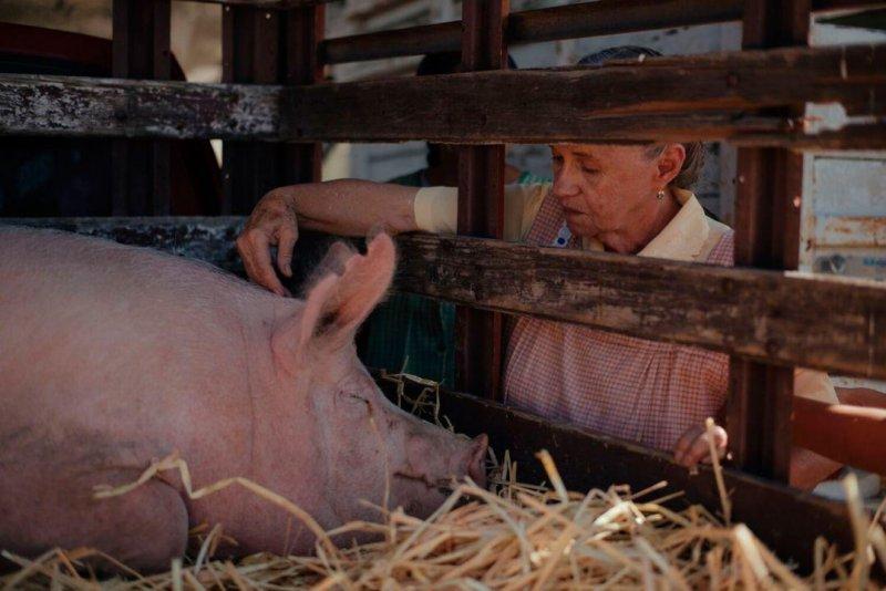【人生電影院】想要卻又留不住,從《阿嬤養的豬》談起